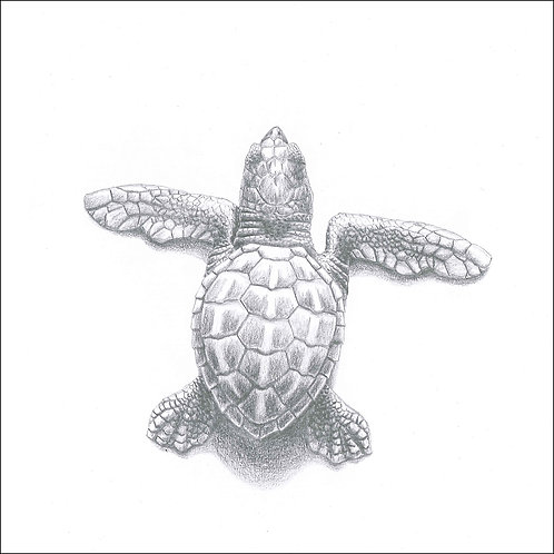 greeting card - turtle hatchling (code D08)