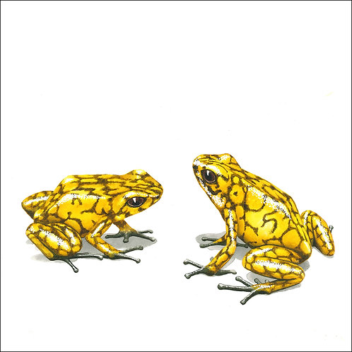 greeting card - two yellow frogs (code D06)