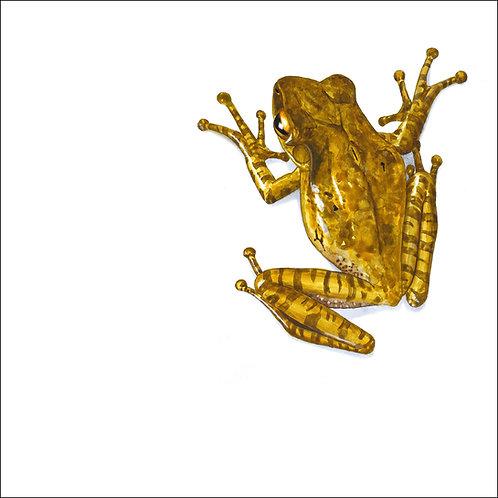 greeting card - brown tree frog (code D05)