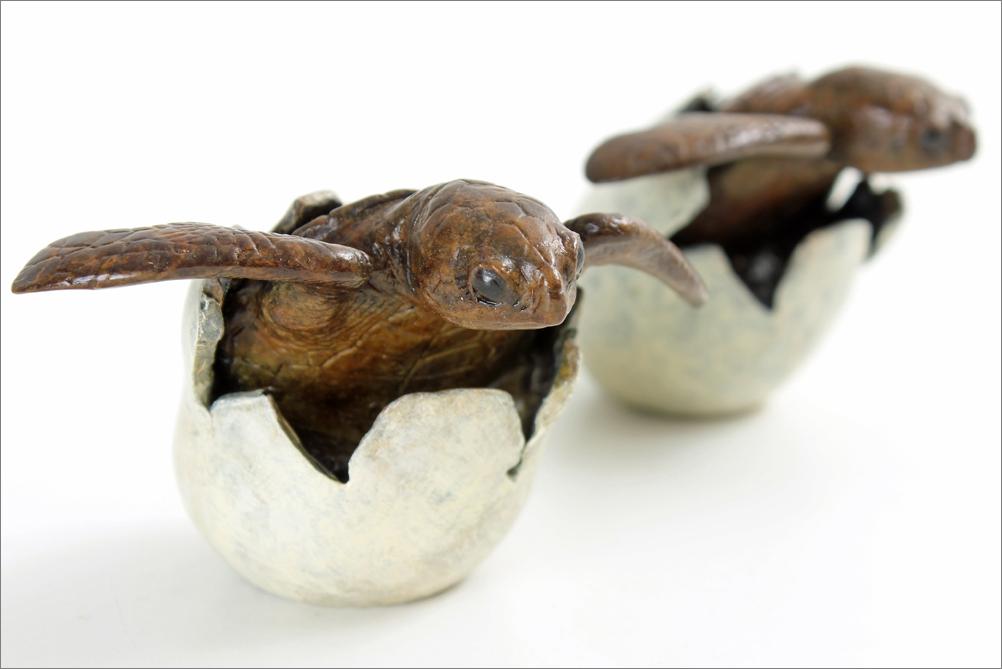 hatching turtles