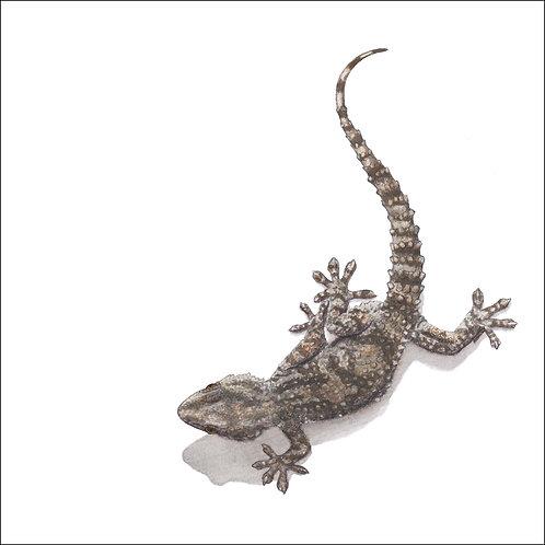 greeting card - gecko (code D01)