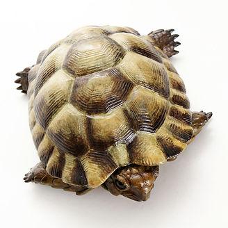 Bronze tortoise sculpture by Geckoman, John Noble-Milner, wildlife sculptor and artist