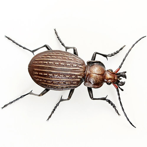 granulated ground beetle - limited edition bronze