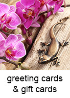 cards_gift_cards_143x200_18pt_arial.jpg