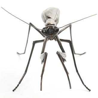 Bronze praying mantis sculpture by Geckoman, John Noble-Milner, wildlife sculptor and artist