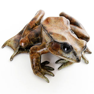 Bronze frog sculpture by Geckoman, John Noble-Milner, wildlife sculptor and artist
