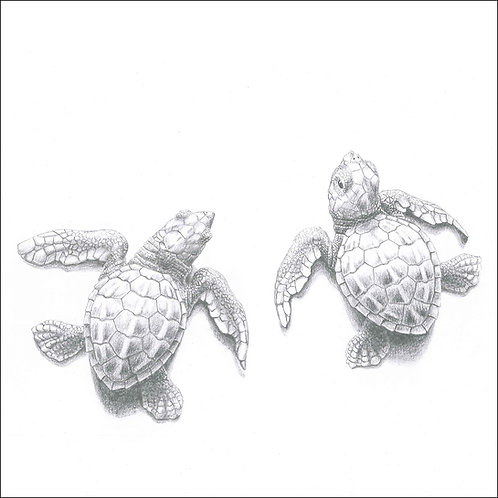 greeting card - turtle hatchlings (code D09)