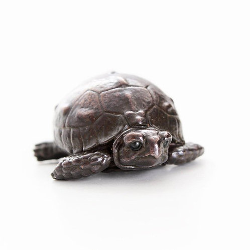 tortoise hatchling with head emerging from shell - bronze