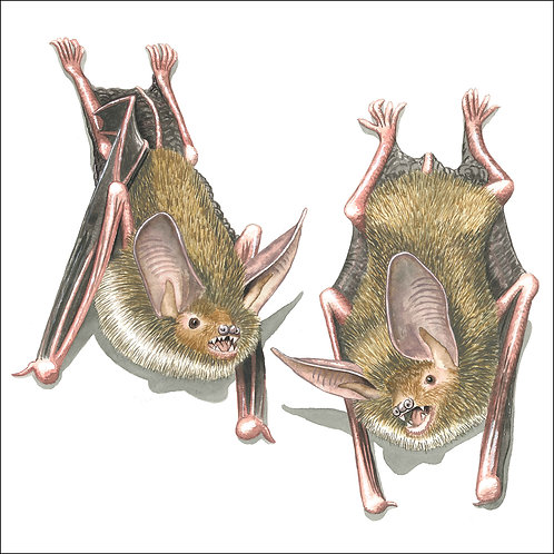 greeting card - two bats (code D07)