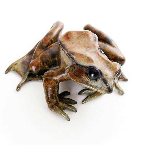 common frog looking left - limited edition bronze