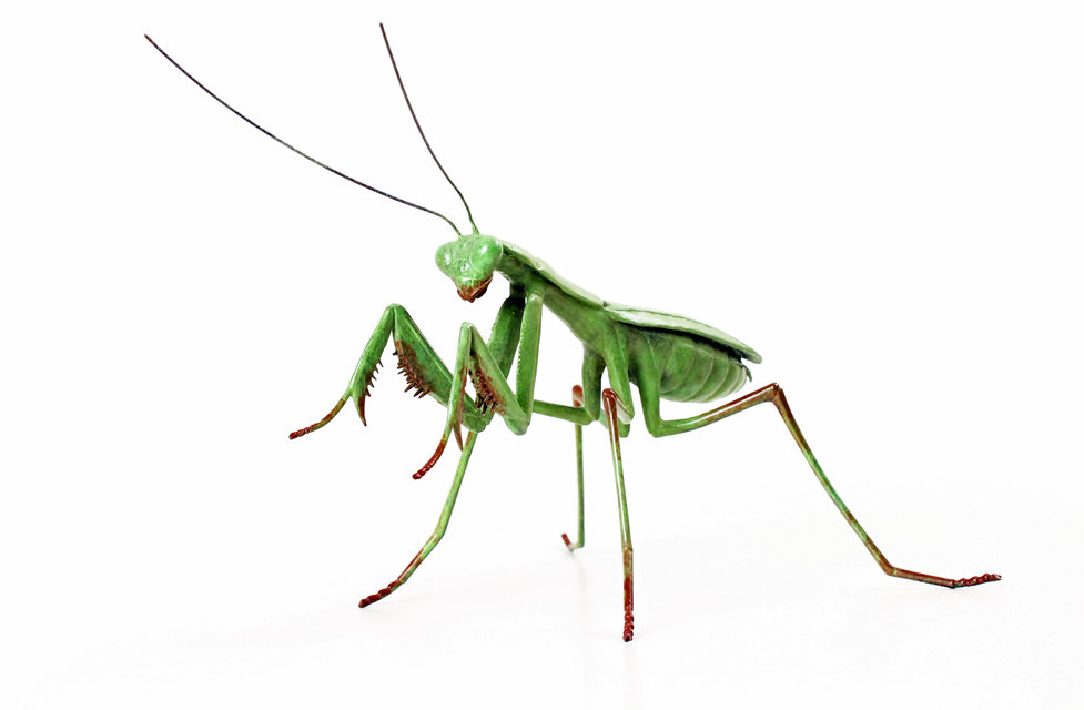 bronze praying mantis sculpture