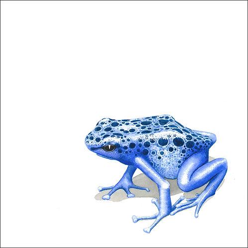 greeting card - blue dart frog (code D04)