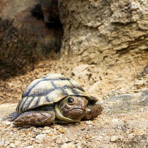 greeting card - tortoise (code P21)