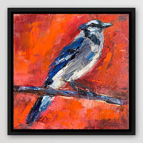 "Blue Jay, 6""x6"""