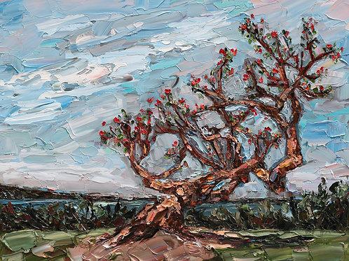 "Coral Tree, 30""x24"""