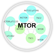 MTOR_CLL.png