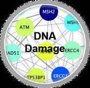 DNADamage_CLL.png