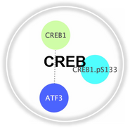 CREB_CLL.png