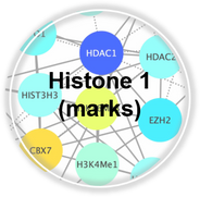 Histone1_CLL.png