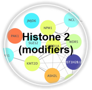 Histone2_CLL.png