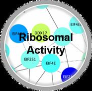 Ribosomal_CLL.png