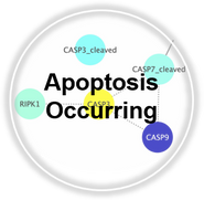Apoptosis_Occur_CLL.png