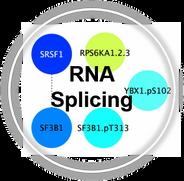 RNASplicing_CLL.png