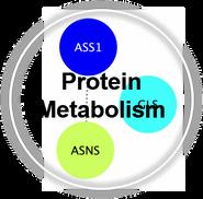 metProtein_CLL.png