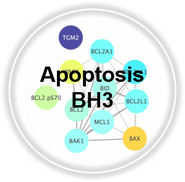 Apoptosis_BH3_CLL.png