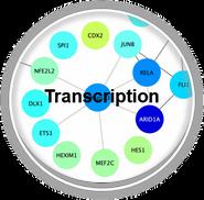 Transcription_CLL.png