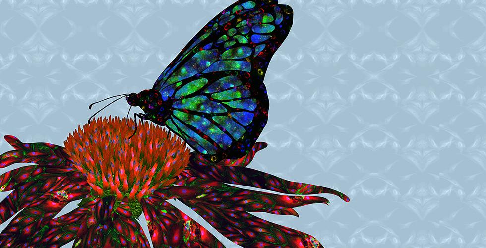 cellArt: Butterfly & Coneflower