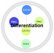 Differentiation_CLL.png