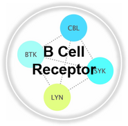 BCellReceptor_CLL.png