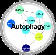 Autophagy_CLL.png