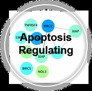 Apoptosis_Reg_CLL.png