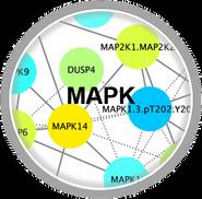 MAPK_CLL.png
