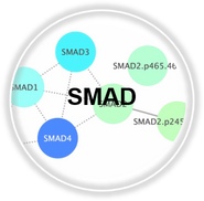 SMAD_CLL.png