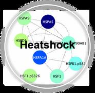 Heatshock_CLL.png