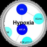 Hypoxia_CLL.png