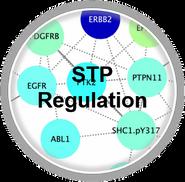 STPRegulation_CLL.png