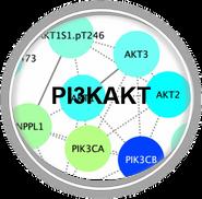 PI3KAKT_CLL.png