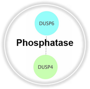 phosphatase_CLL.png