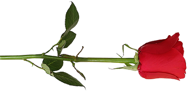 rose png_edited_edited.png