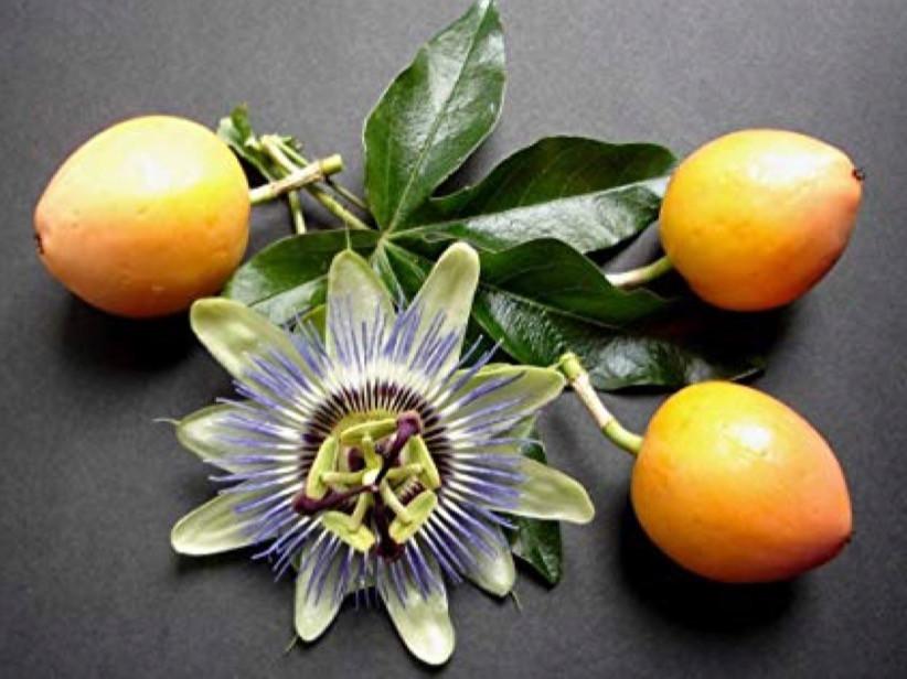 Ripe Passionfruit