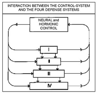 Interaction Between the Neuro-Hormonal Control System and the Four Defense Zones