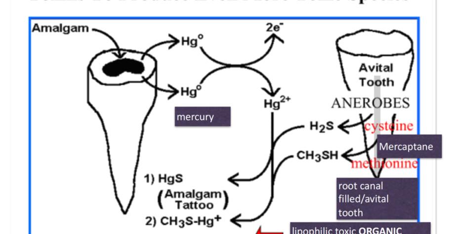 The role of dental field of disturbances