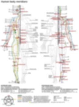 Human body meridians