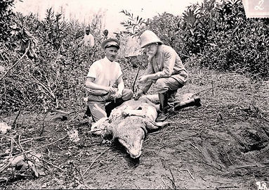 Robert Koch and Fredrich Karl Dissecting a Crocodile to Investigate the Sleeping Sickness Pathogen on the SSese Islands off Uganda 1906