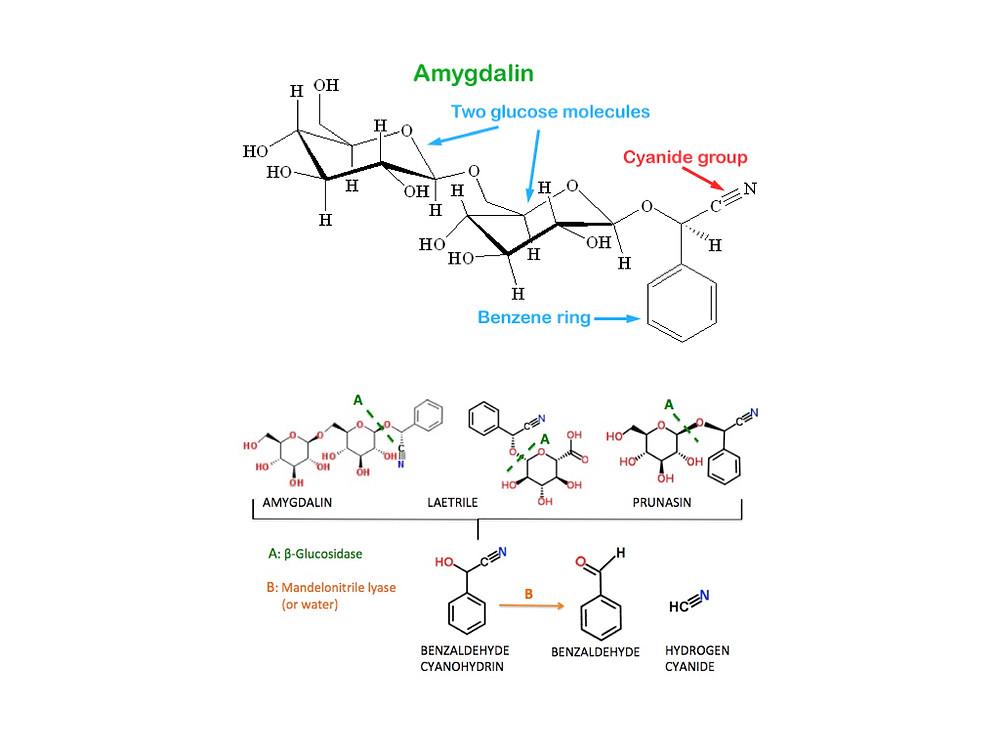 Amygdalin Chemistry
