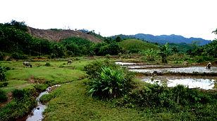 Grotte de Phong Nha (UNESCO)